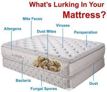 Thoroughly Exhaustive Mattress Cleaning Throughout SW Florida