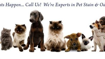 Pet Urine and Carpeting - What You Need To Know!
