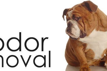Pet Odor & Stain Removal in Cape Coral – Fort Myers