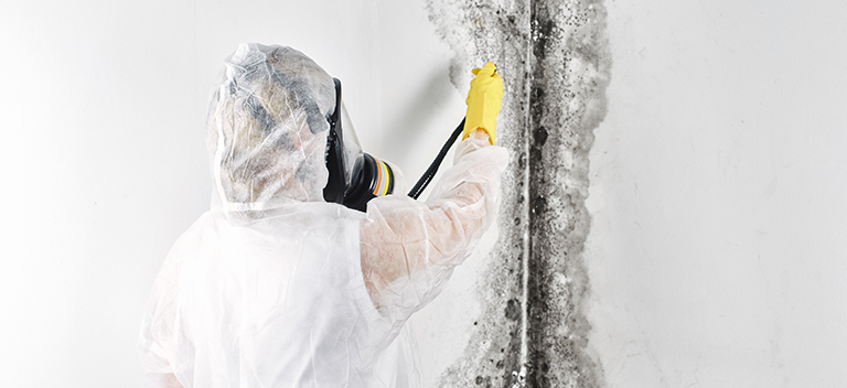 Professional Removing Mold from Water Damage