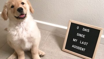 Carpet Cleaning For Pet Issues Cape Coral